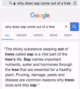 Sap is a tree's blood